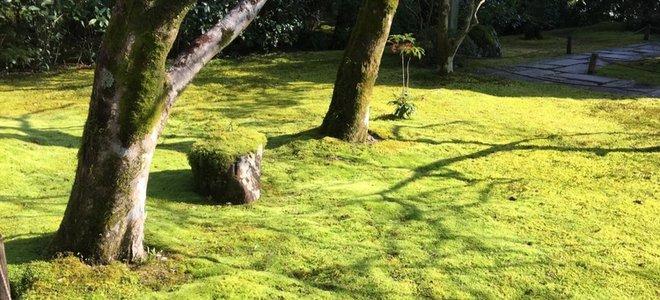 bãi cỏ rêu dưới tán cây