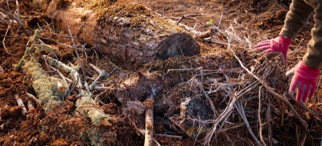 Hügelkultur đống gỗ và lớp phủ