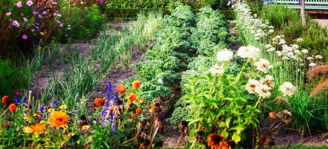 thảo mộc và vườn hoa