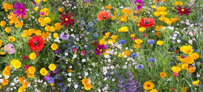 hoa dại đẹp đa dạng