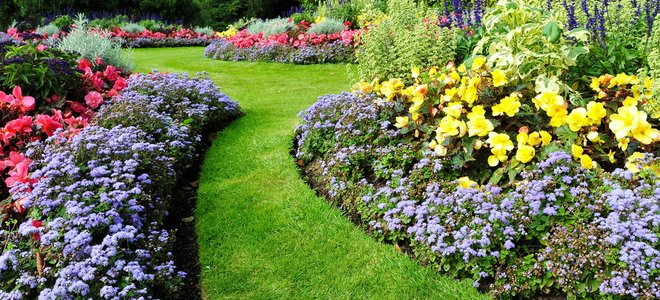 hoa dọc theo con đường cỏ