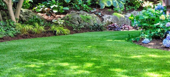 cỏ nhân tạo hoa cỏ viền