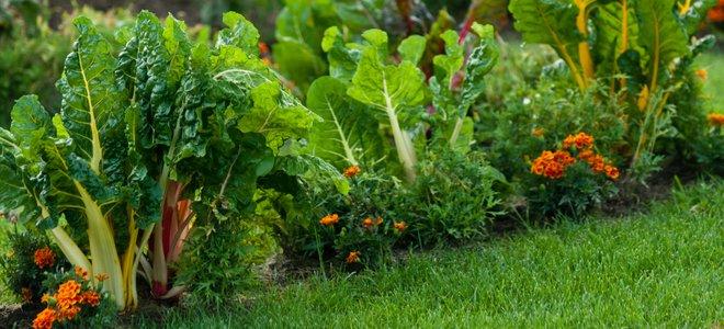 vườn rau ở bãi cỏ