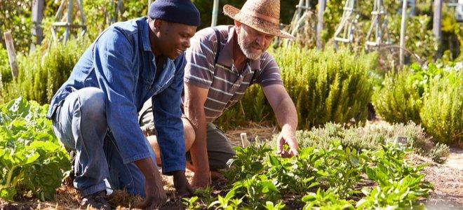 hai người đàn ông làm việc trong một khu vườn