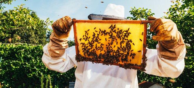 người nuôi ong cầm lược mật ong với ong