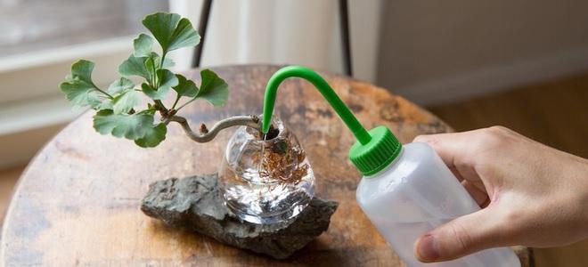 cây bonsai nhỏ trong bình thủy tinh với nước trên bàn gỗ