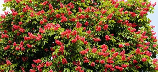 cây khỏe mạnh với hoa màu đỏ
