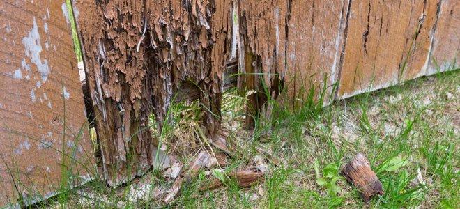 hàng rào gỗ bị hư hỏng với khoảng trống ở phía dưới