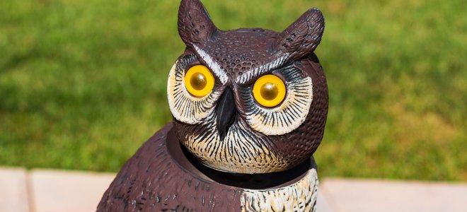 chim cú răn đe với đôi mắt sáng
