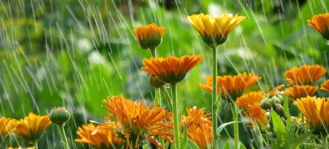mưa hoa cam