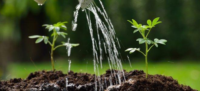 bình tưới nước tưới rễ cây xanh nhỏ