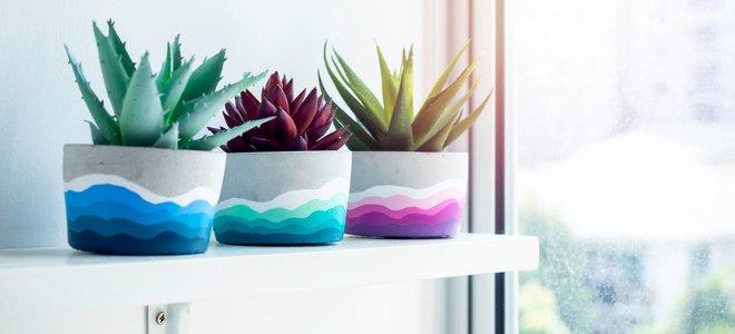 chậu trồng cây xi măng trên kệ với các thiết kế xương rồng và sơn đầy màu sắc