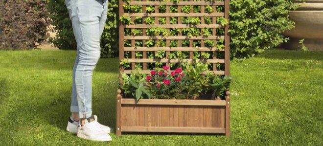 giàn trên bãi cỏ với cây trồng