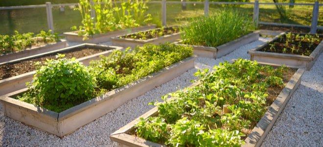 vườn bếp với các loại thảo mộc và rau trên các luống hình chữ nhật nâng lên