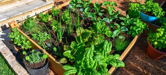 khu vườn vuông nâng lên với các mặt gỗ và rau