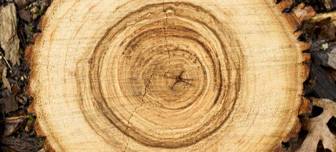 gốc cây gỗ