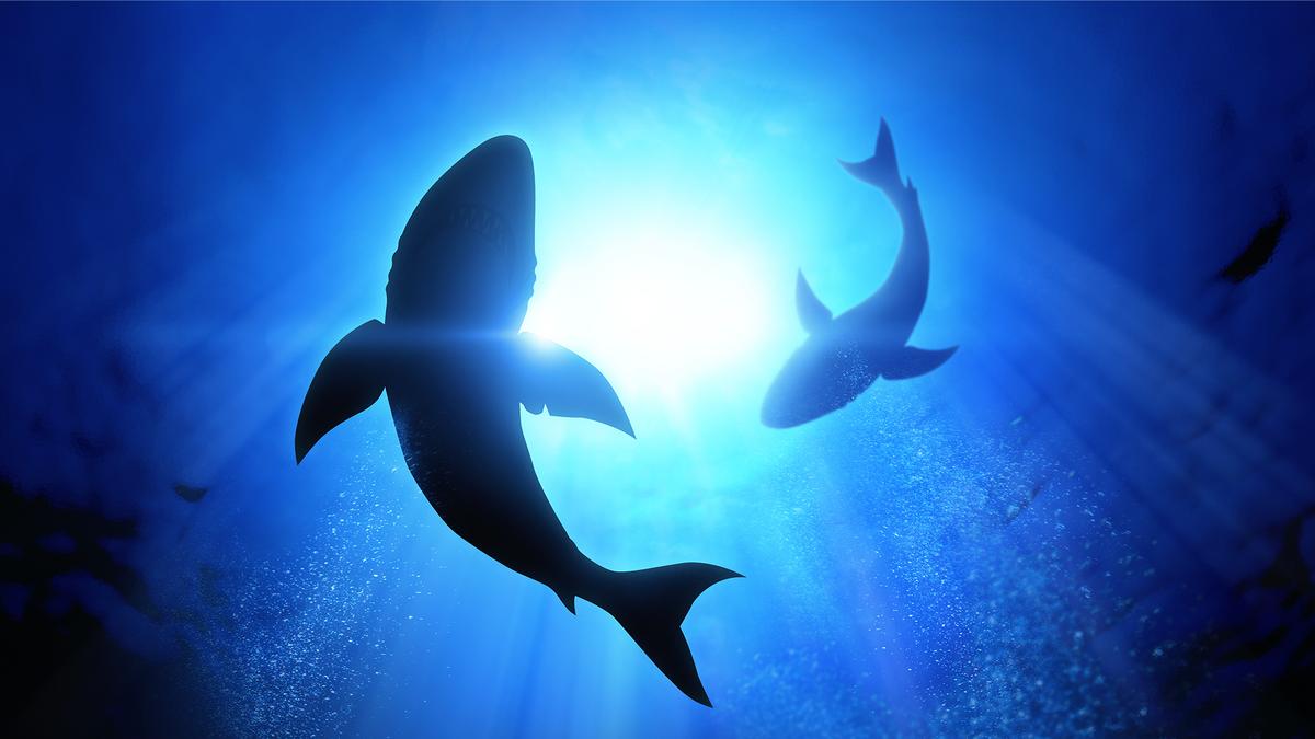 Cá mập bơi trong vùng nước tối.