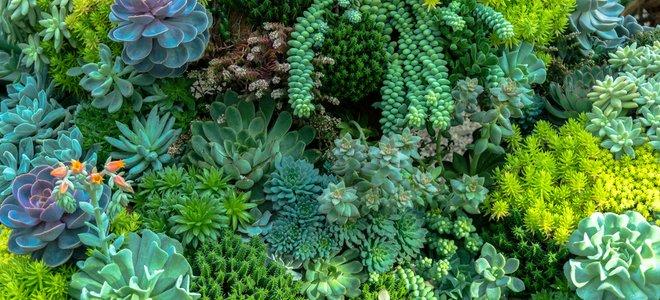 vườn mọng nước xanh